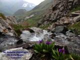 Camping in Kyrgyzstan 4